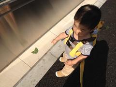 イチョウの葉を指差し「ちょうちょ」と言うとらちゃん(2012/5/30 )
