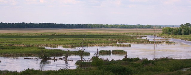 Horicon Marsh