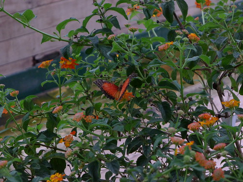 May 30 2012 - Butterfly World