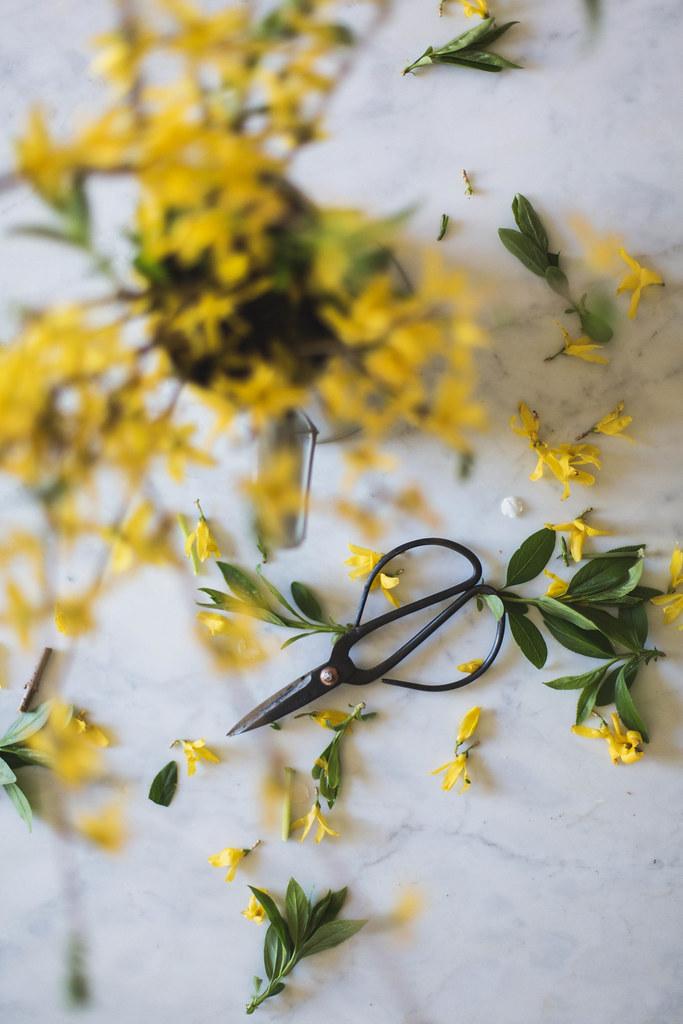 foraged spring florals, forsythia