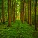 Maple Leaf Path by EmPhoto.