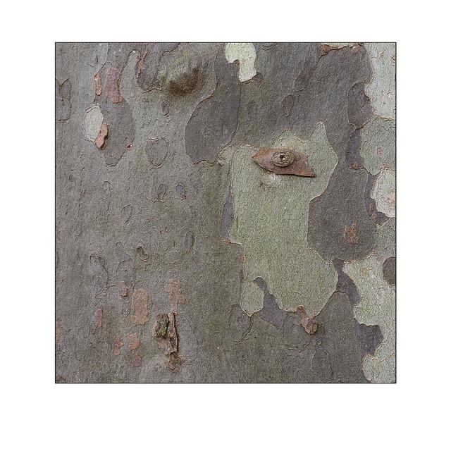Sur les Pas de Paul Klee