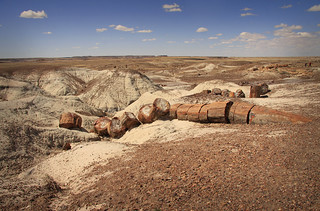'Petrified Forest, Arizona' by  minniemouseaunt