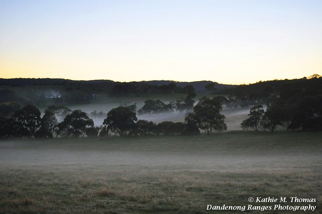 Overlooking a misty paddock from Lysterfield Road