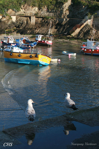 Newquay Harbour by Stocker Images