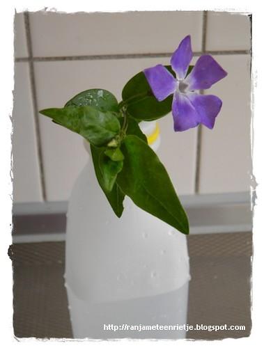bloem in melkfles