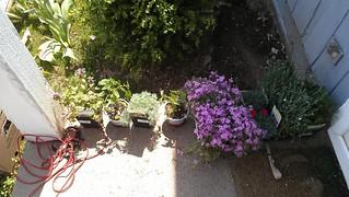 PlantsAtHome