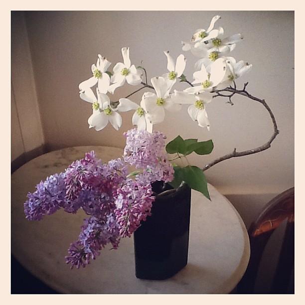 Dogwood and lilac