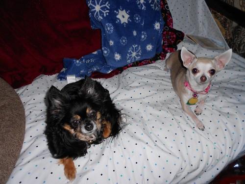 Itzl and Xoco