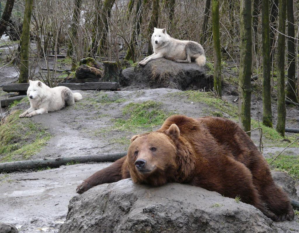 クマの画像 p1_29