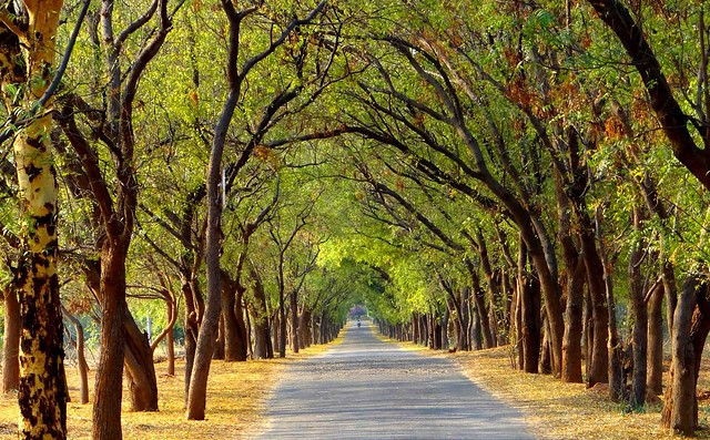 Prettiest Road Ever in Bagan