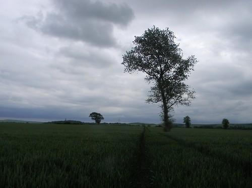 Through a big field
