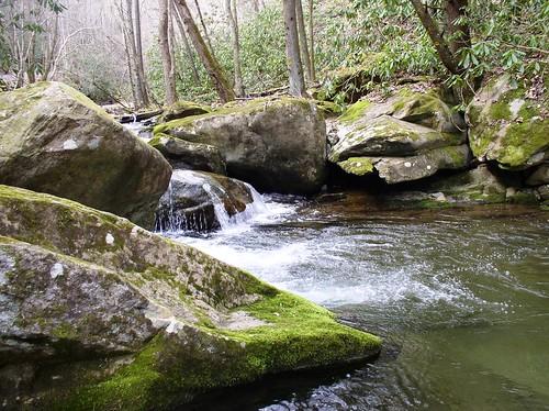 nature river fishing tennessee streams rockyfork flagpond