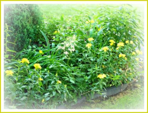 flowers garden spring processed