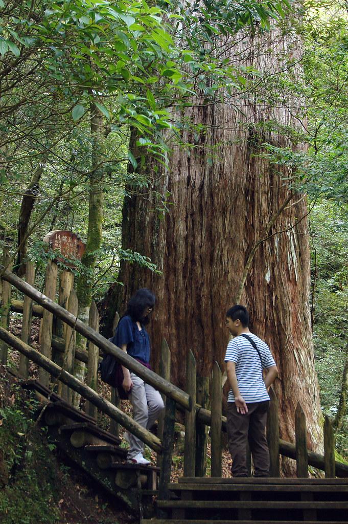 巨木群,與往拉拉山的路上-052