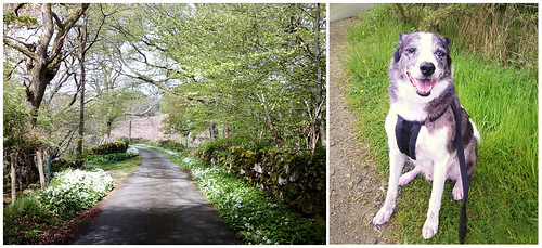 Diptych -- Dog walking by Helen in Wales