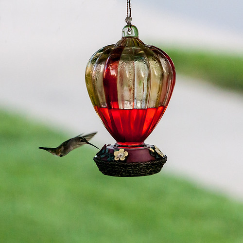 The First Hummingbirds of the year by matneym