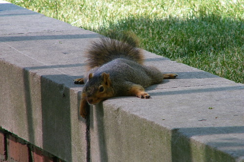 Squirrel at the University of Michigan (May 24th & 25th, 2012)