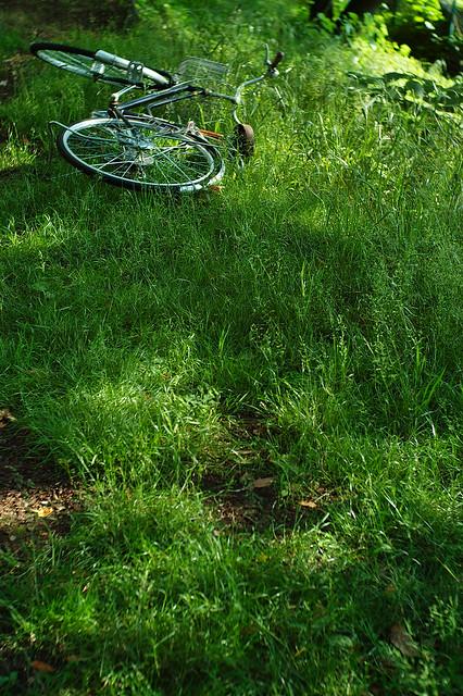 芝生の自転車