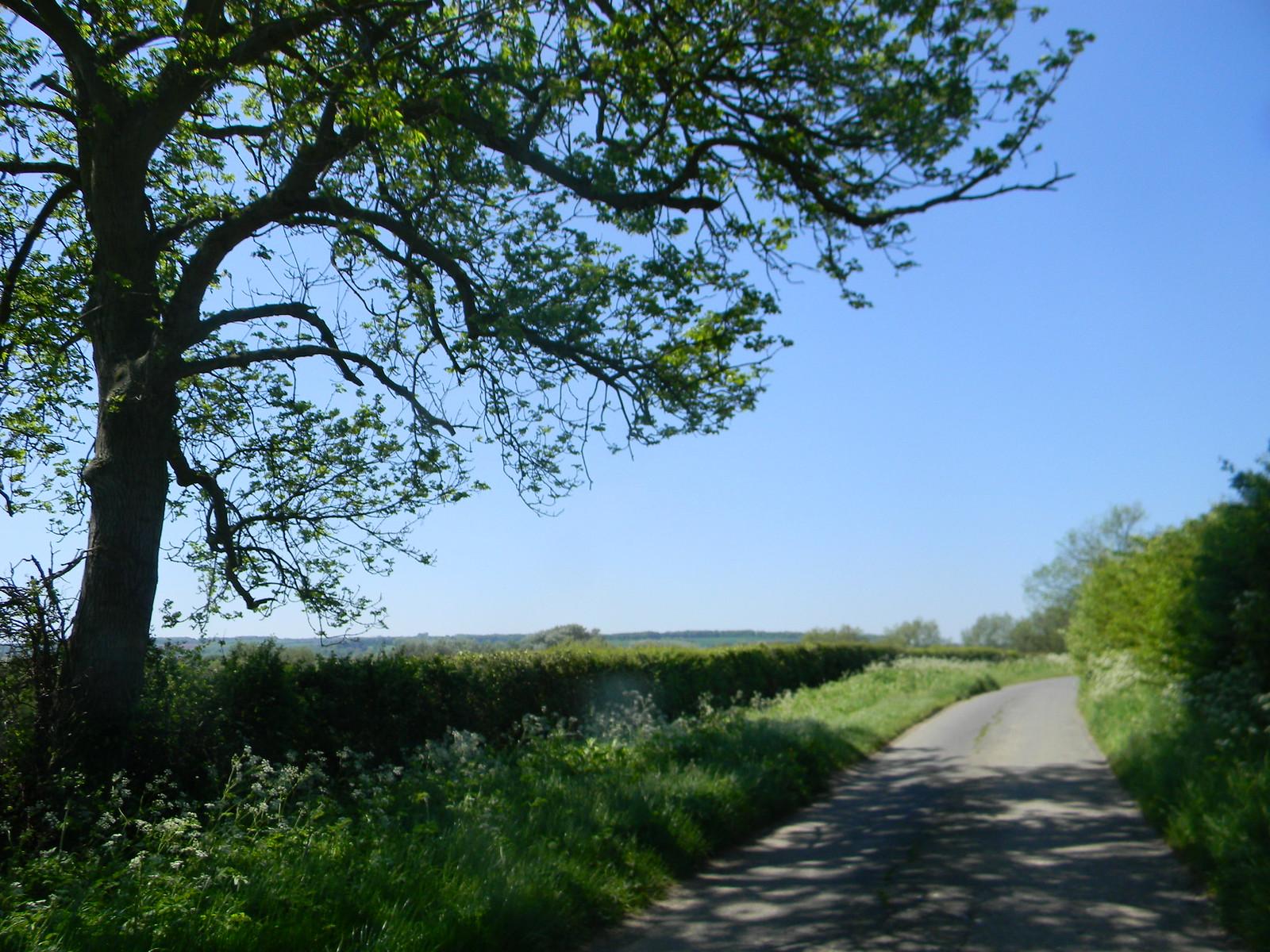 Tree and wall Moreton-in-Marsh Circular