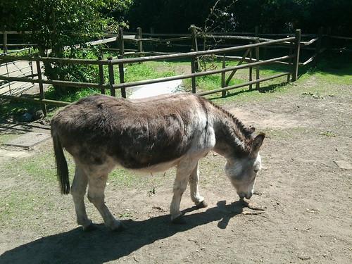 Donkey's donkey