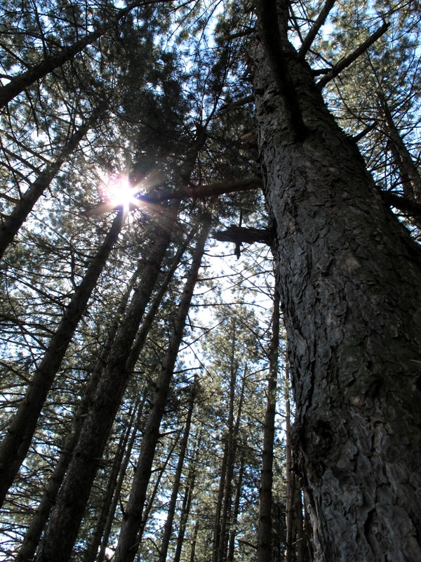 Forêt autour de Sarajevo