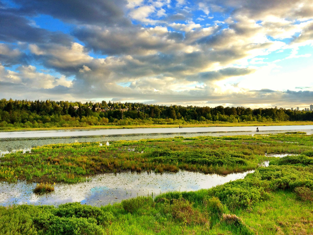 Marshland at Burnaby Lake