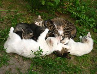 cats gang relax2