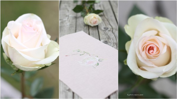 MTSA. Rose