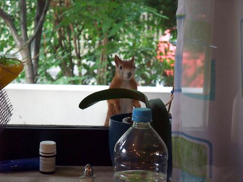 Eichhörnchenbesuch