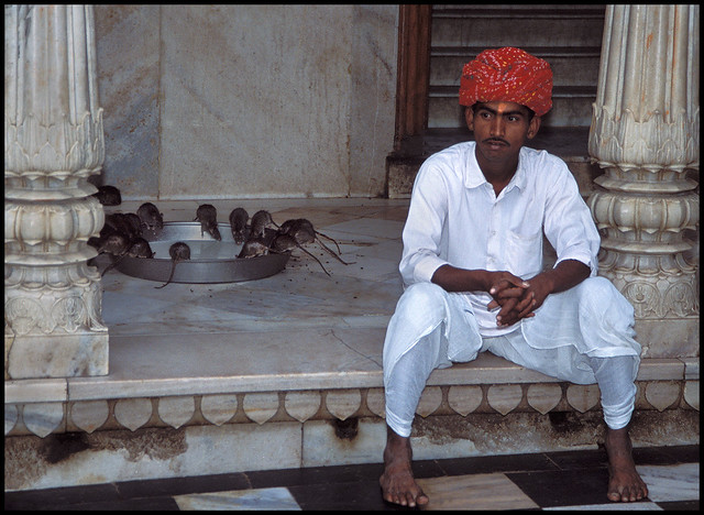 Karni Mata Temple (aka the Rat Temple)