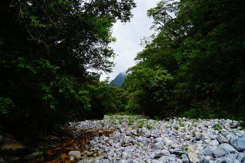 verde méxico río hidalgo selvamedia