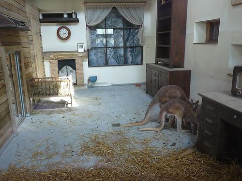 Zoo Jihlava: Klokani v obýváku a pelikání lov