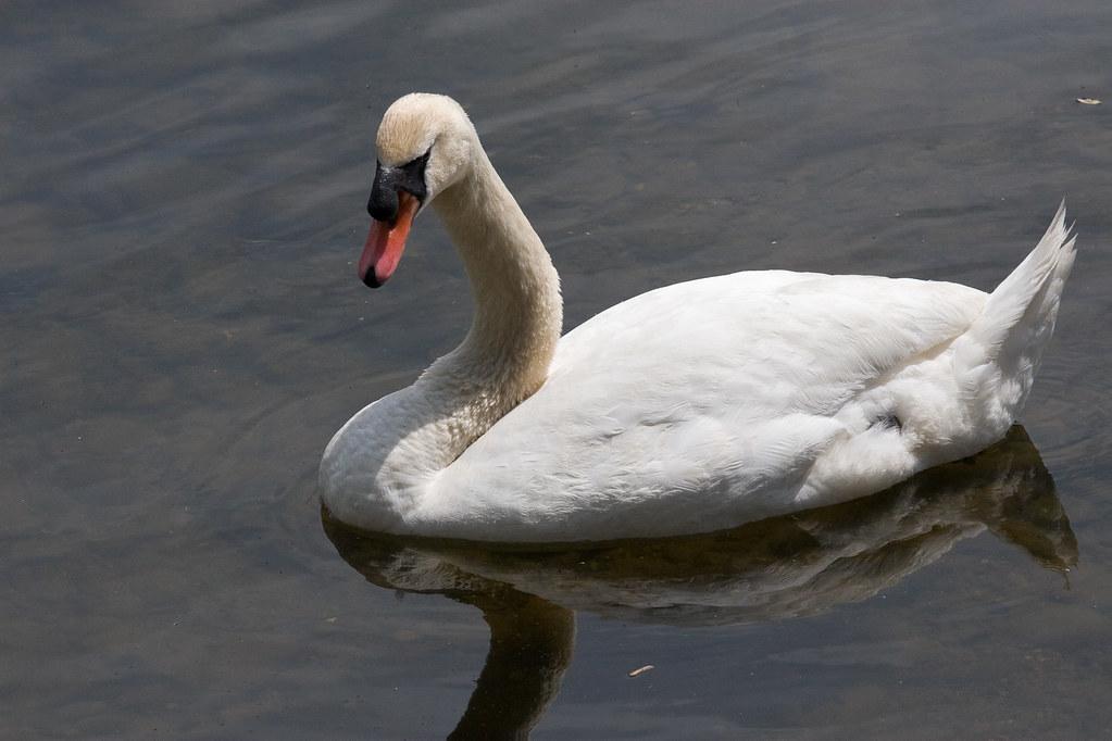 floating wildlife
