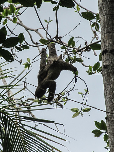 Bocas del Toro: l'île aux Paresseux
