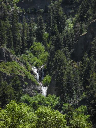 forest wasatch lebarodea upperfalls provocanyon utah green vivid waterfall cascade cascademountain pine limestone confluence step lush rock cliff layer creek stream
