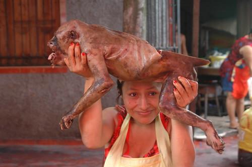 Howler monkey, Mercado Belen, Iquitos, Peru