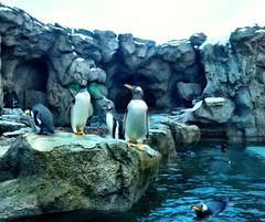 20120325 calgary zoo - 16