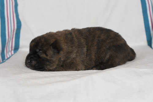 Kumi-Fall2011-Day12-Puppy5-Female-c
