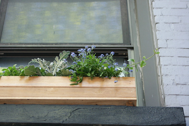 window box, from below