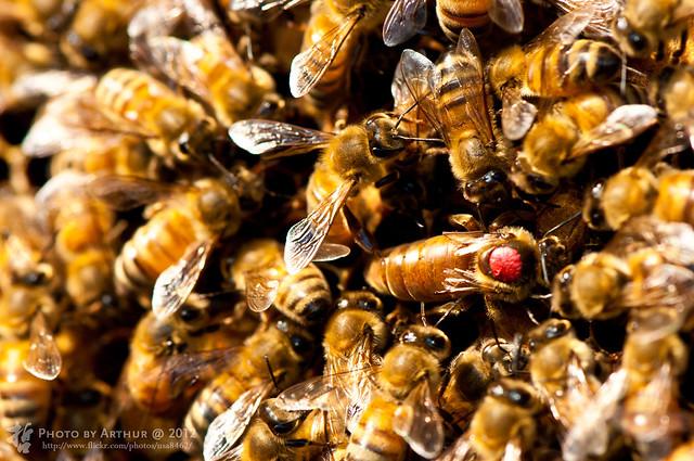 女王蜂 (バンド)の画像 p1_7