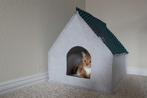 cathouse1