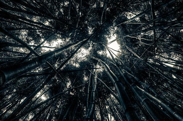 Sound Forest
