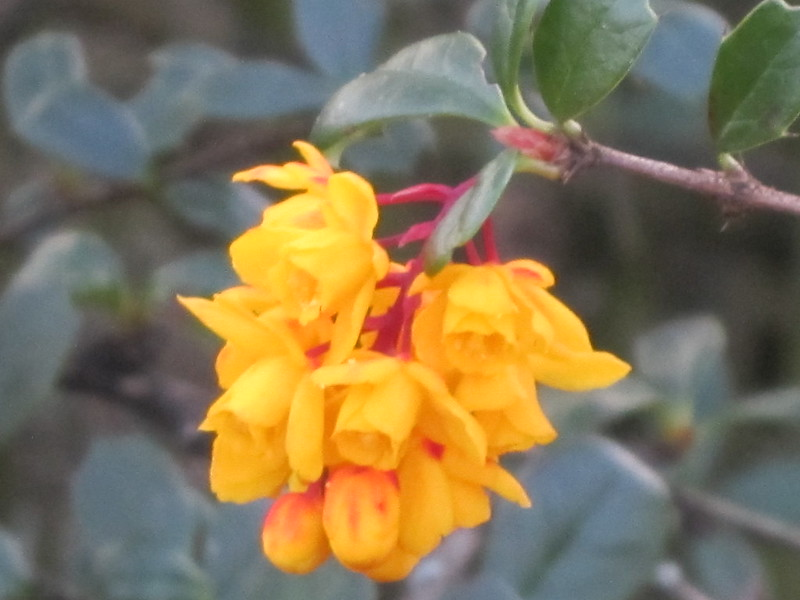 012 Spring flower