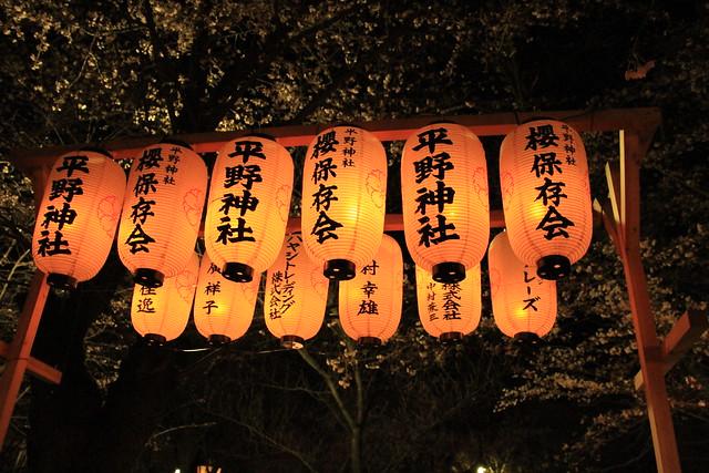 京都桜案内 sakura from kyoto