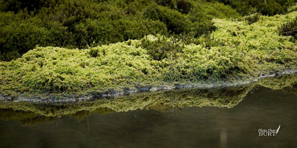 加羅湖步道旁的苔蘚