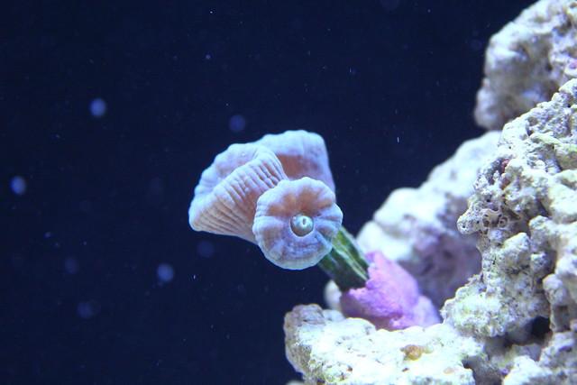 Collecting Saltwater Aquarium Fish In Panama City Beach Florida