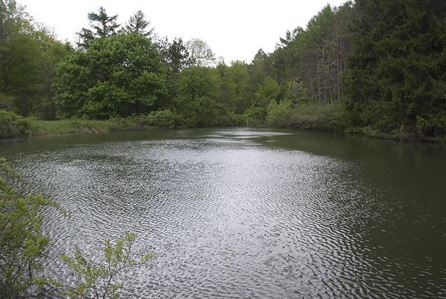 Holt Preserve