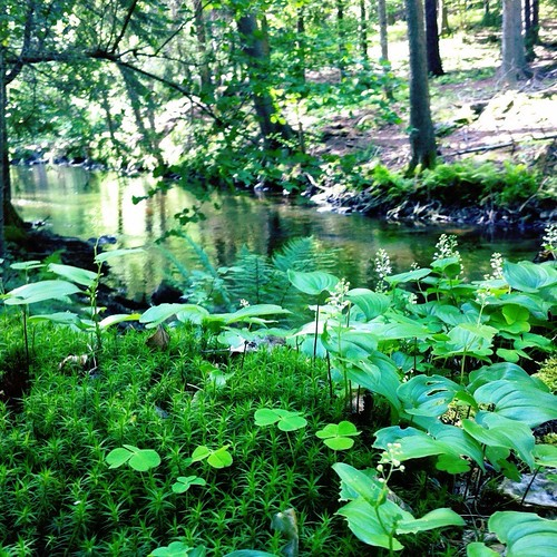 Moss near the river