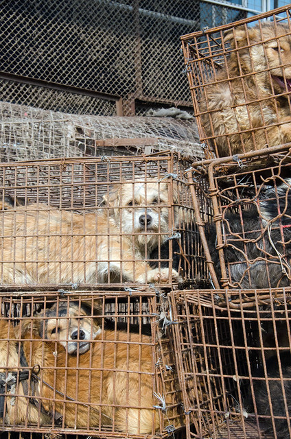 Dog Meat Trade - China